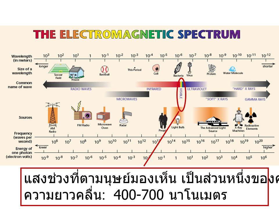 แสงช่วงที่ตามนุษย์มองเห็น เป็นส่วนหนึ่งของคลื่นแม่เหล็กไฟฟ้า