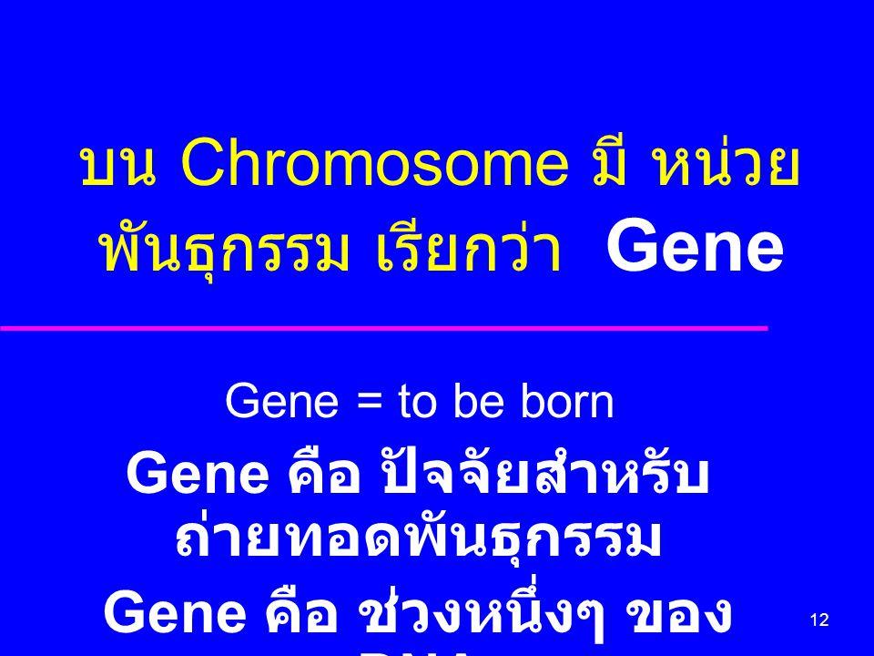 บน Chromosome มี หน่วยพันธุกรรม เรียกว่า Gene