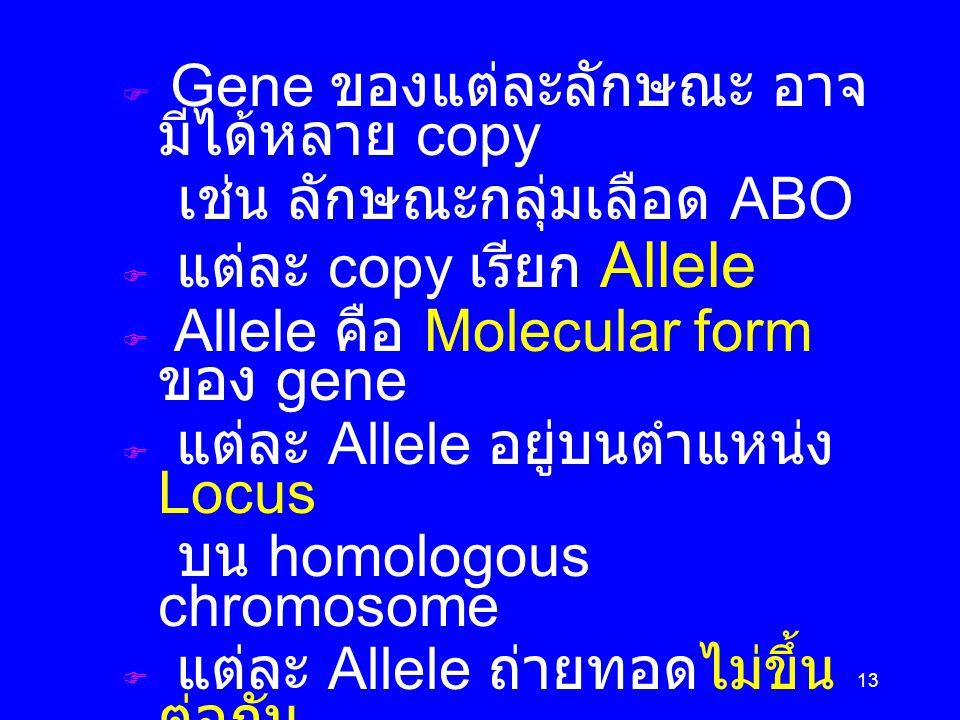 เช่น ลักษณะกลุ่มเลือด ABO แต่ละ copy เรียก Allele