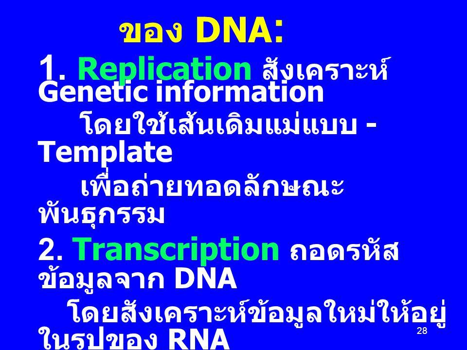 1. Replication สังเคราะห์ Genetic information