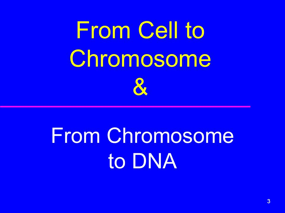From Cell to Chromosome &