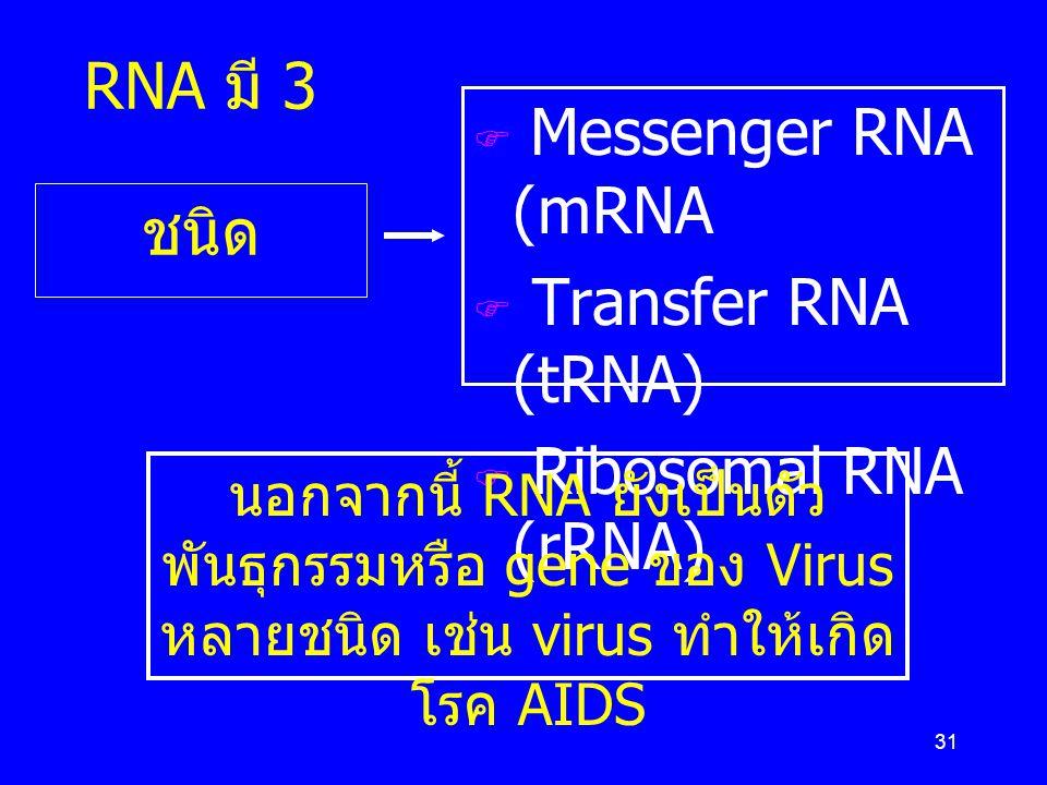 Messenger RNA (mRNA Transfer RNA (tRNA) RNA มี 3 ชนิด