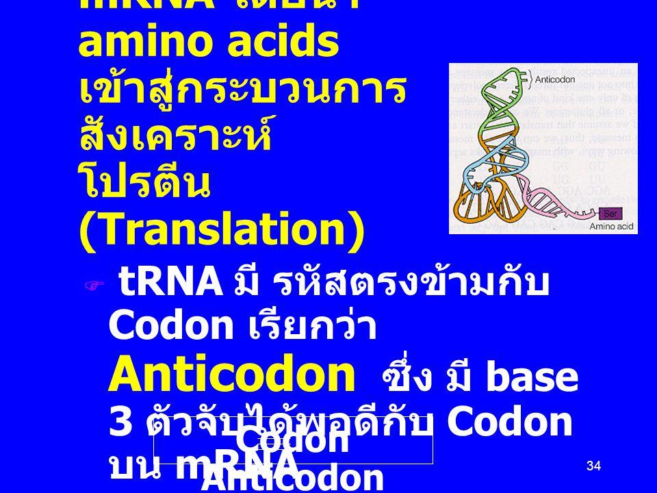 Transfer RNA (tRNA) เป็นผู้แปลหรืออ่านรหัสบน mRNA โดยนำ amino acids เข้าสู่กระบวนการสังเคราะห์ โปรตีน (Translation)