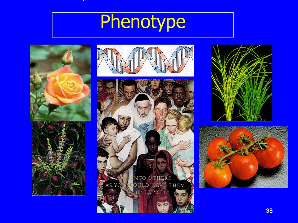 สรุป : From DNA to Phenotype