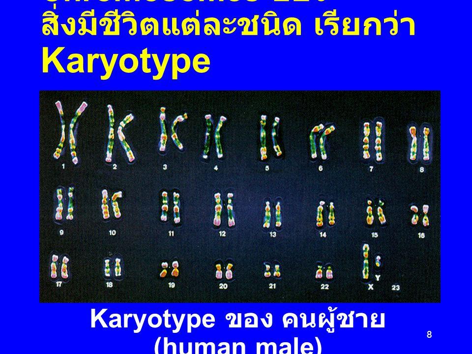 Karyotype ของ คนผู้ชาย (human male)