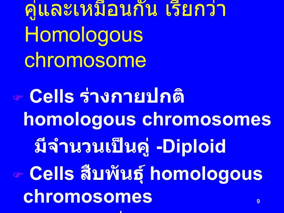 Chromosome ปกติมีเป็นคู่และเหมือนกัน เรียกว่า Homologous chromosome