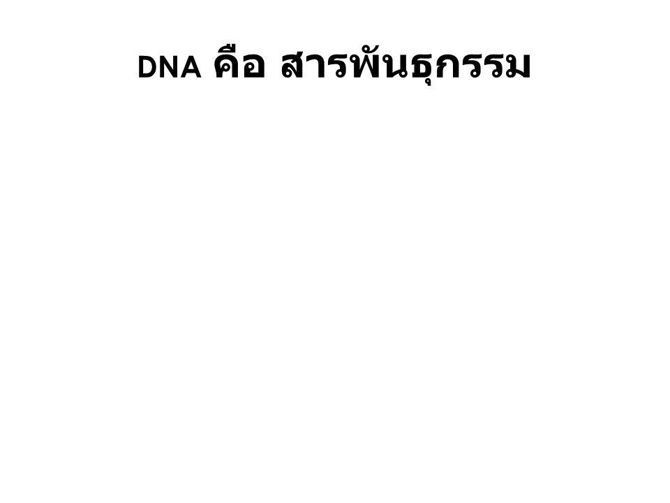 DNA คือ สารพันธุกรรม