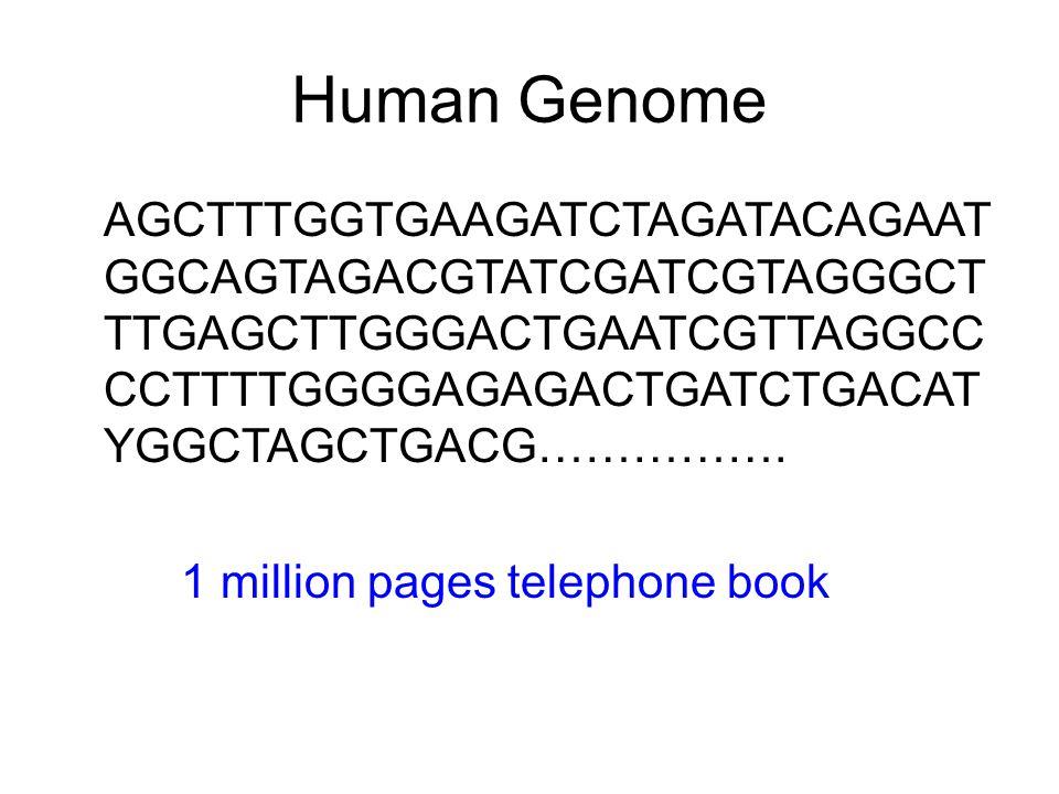 Human Genome AGCTTTGGTGAAGATCTAGATACAGAATGGCAGTAGACGTATCGATCGTAGGGCTTTGAGCTTGGGACTGAATCGTTAGGCCCCTTTTGGGGAGAGACTGATCTGACATYGGCTAGCTGACG…………….