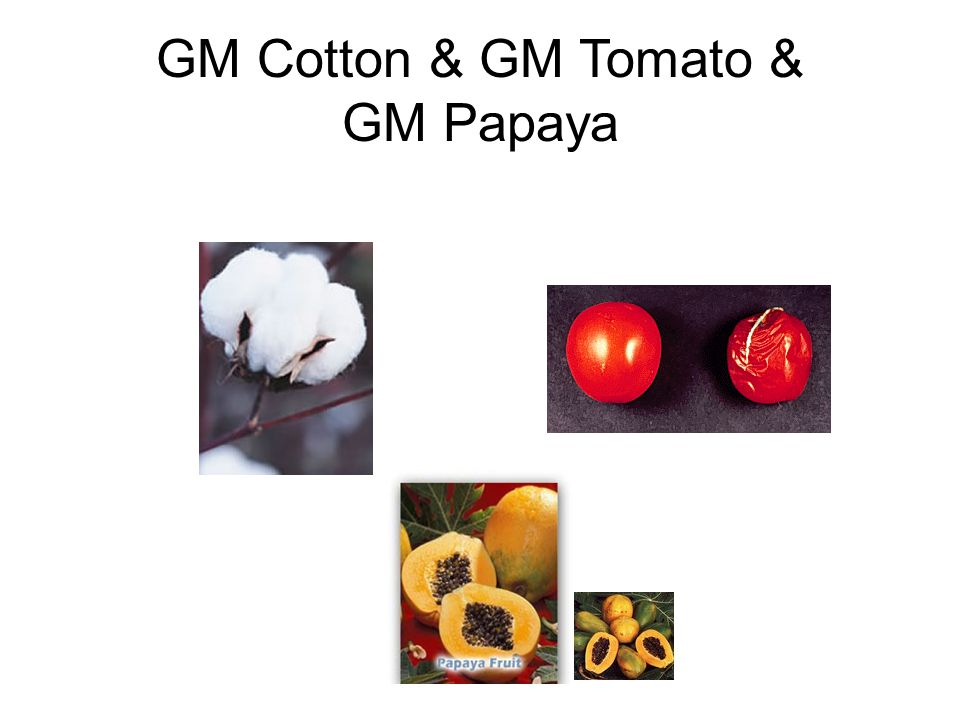 GM Cotton & GM Tomato & GM Papaya