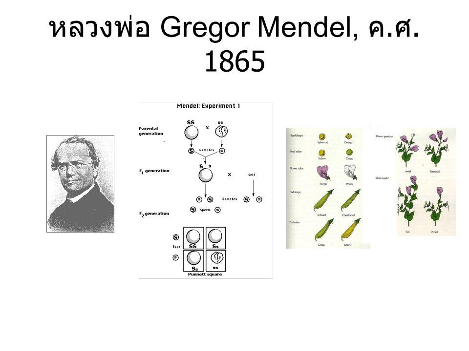 หลวงพ่อ Gregor Mendel, ค.ศ. 1865
