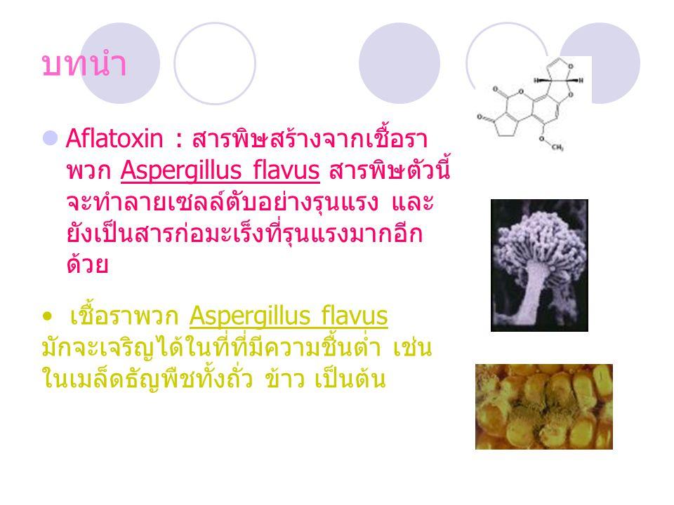 บทนำ Aflatoxin : สารพิษสร้างจากเชื้อราพวก Aspergillus flavus สารพิษตัวนี้จะทำลายเซลล์ตับอย่างรุนแรง และยังเป็นสารก่อมะเร็งที่รุนแรงมากอีกด้วย.