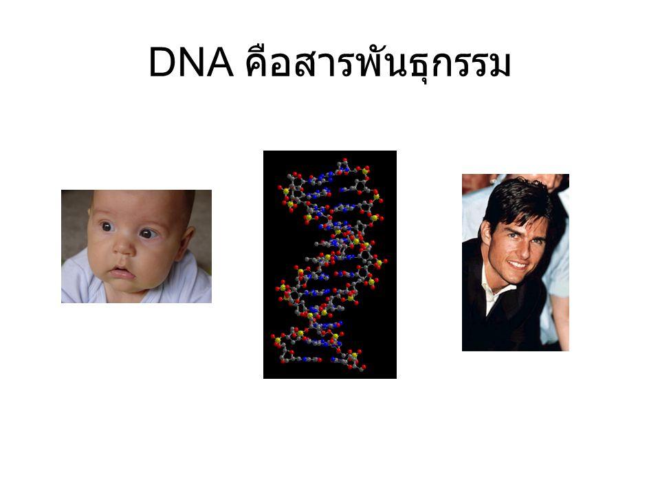 DNA คือสารพันธุกรรม