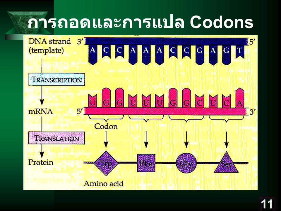 การถอดและการแปล Codons