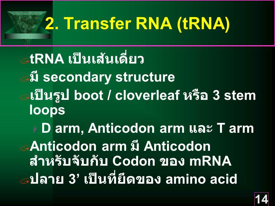 2. Transfer RNA (tRNA) tRNA เป็นเส้นเดี่ยว มี secondary structure