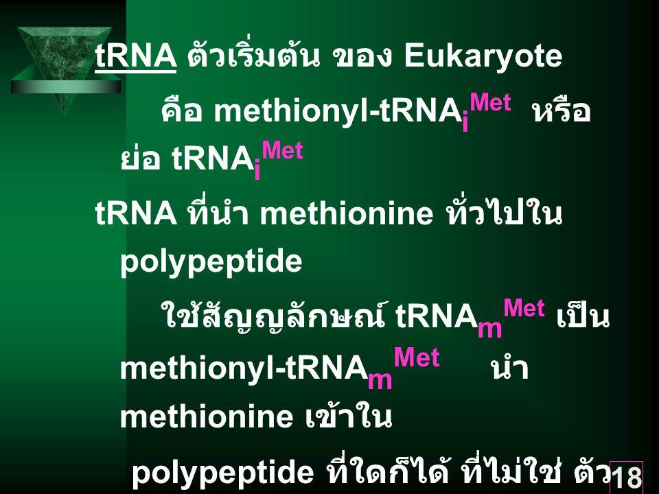 tRNA ตัวเริ่มต้น ของ Eukaryote