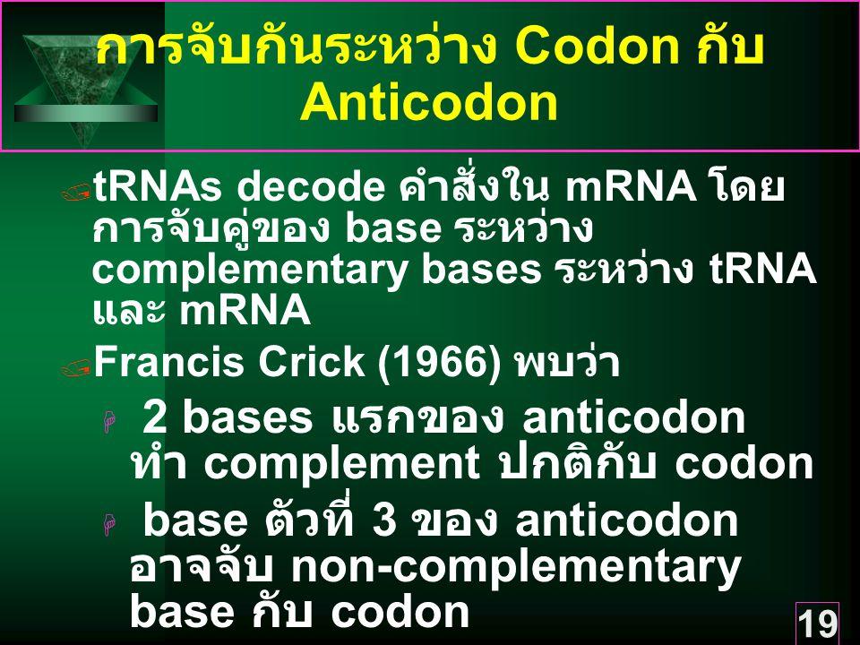 การจับกันระหว่าง Codon กับ Anticodon
