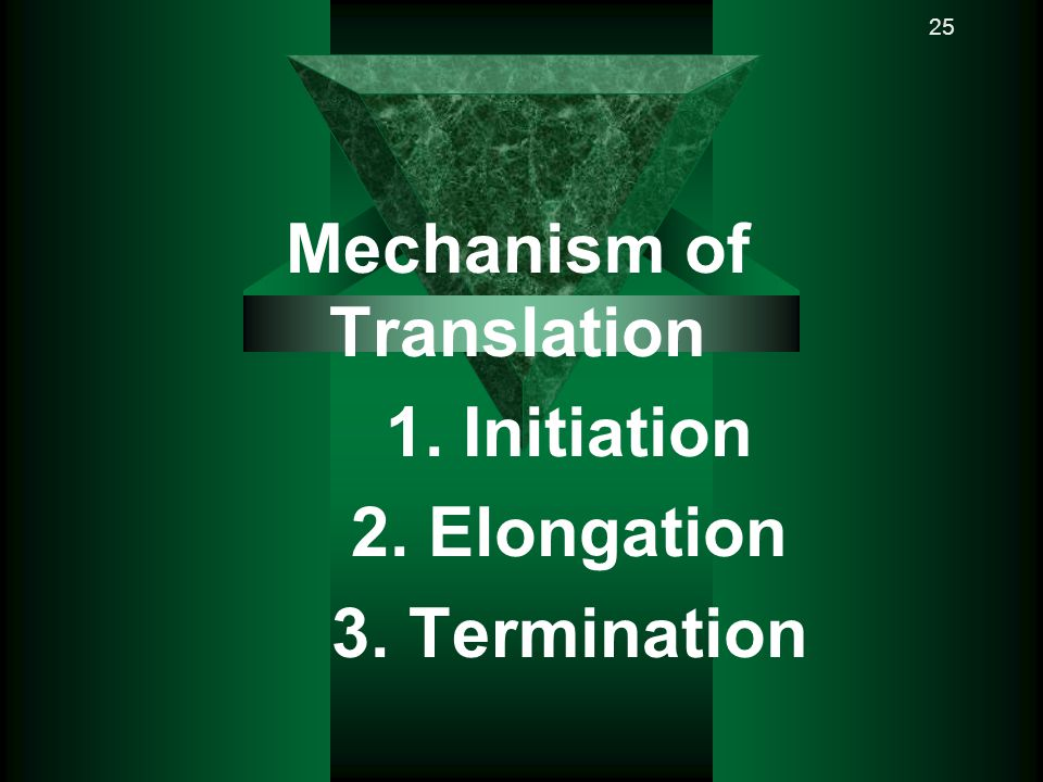 Mechanism of Translation 1. Initiation 2. Elongation 3. Termination