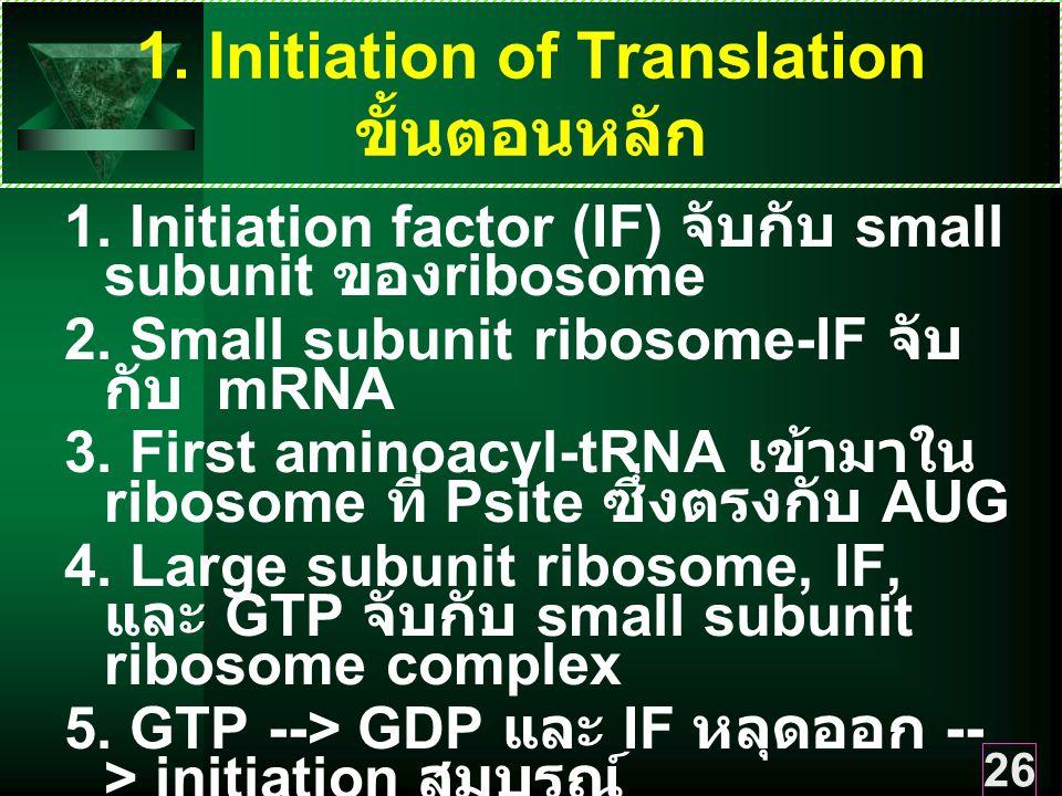 1. Initiation of Translation ขั้นตอนหลัก