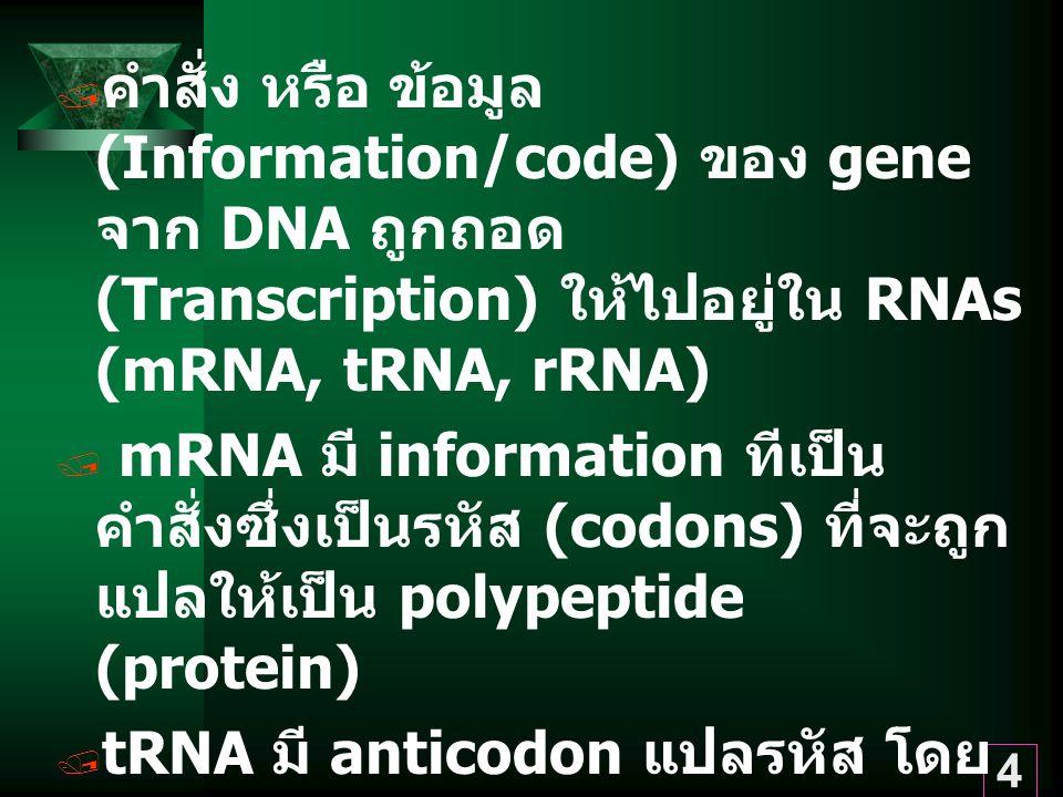 คำสั่ง หรือ ข้อมูล (Information/code) ของ gene จาก DNA ถูกถอด (Transcription) ให้ไปอยู่ใน RNAs (mRNA, tRNA, rRNA)