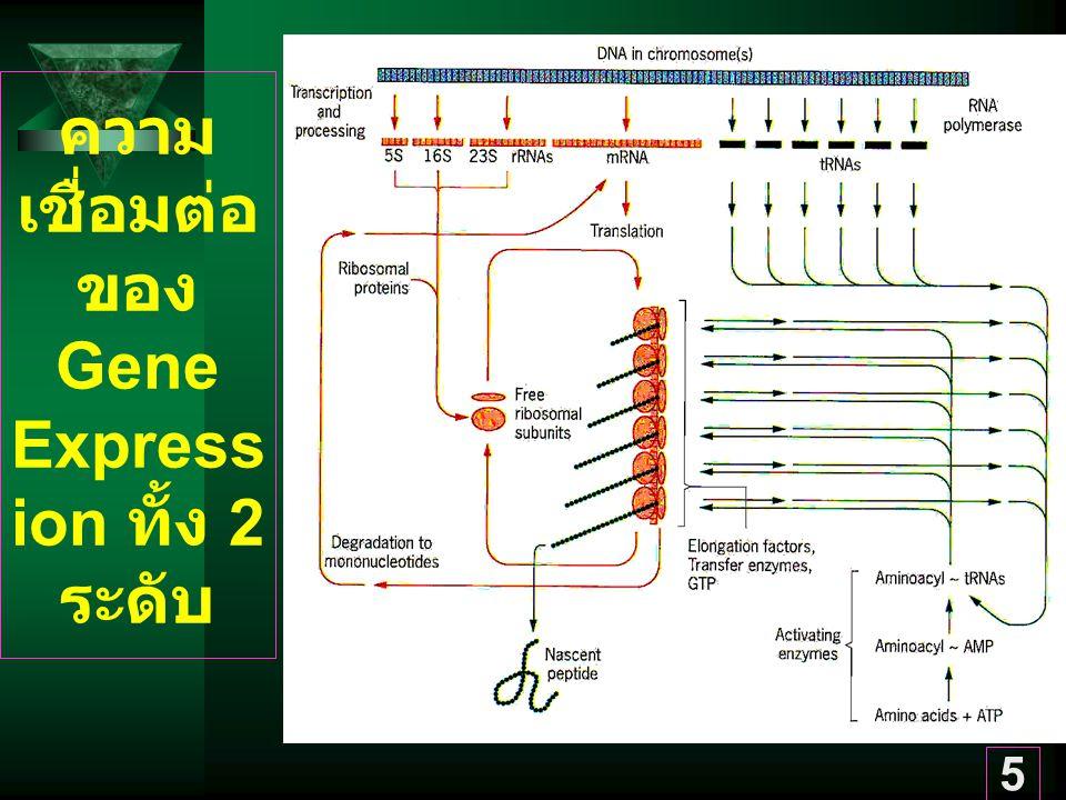 ความเชื่อมต่อของ Gene Expression ทั้ง 2 ระดับ