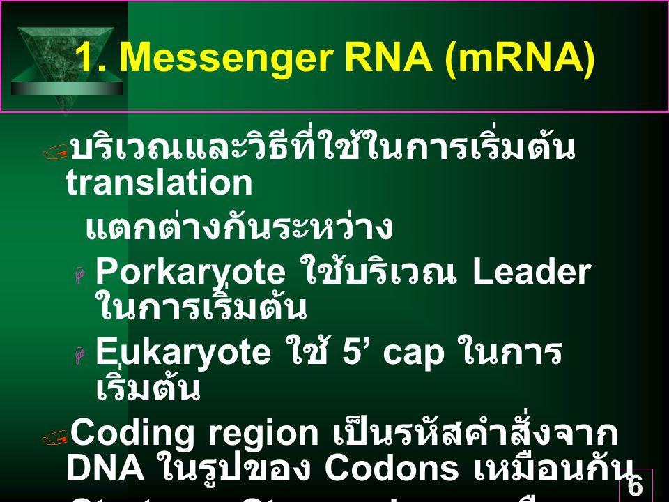 1. Messenger RNA (mRNA) บริเวณและวิธีที่ใช้ในการเริ่มต้น translation