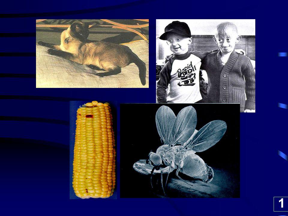 104203 : Mutation 04/04/60 รศ.ดร.กรกช อินทราพิเชฐ