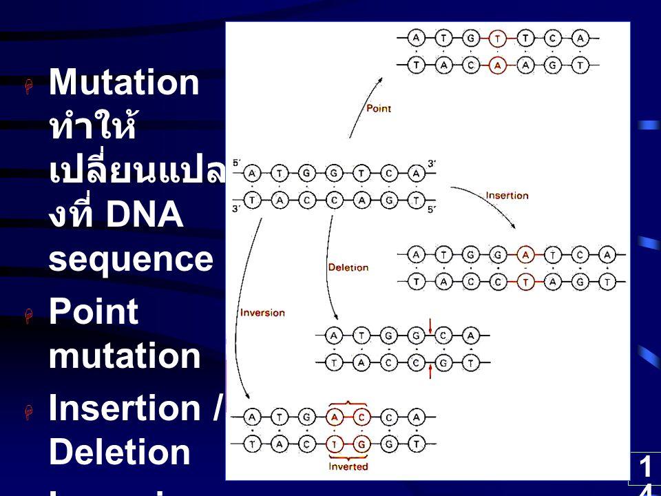 Mutation ทำให้เปลี่ยนแปลงที่ DNA sequence