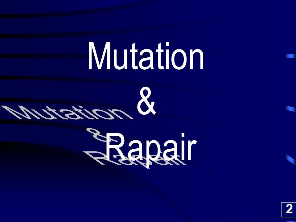 Mutation & Rapair