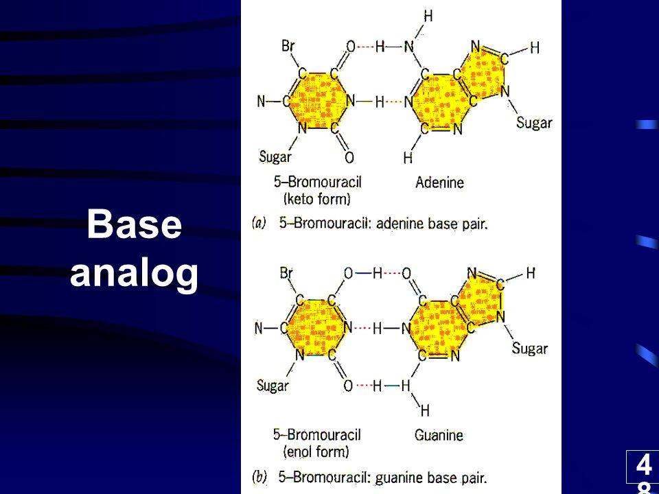 Base analog