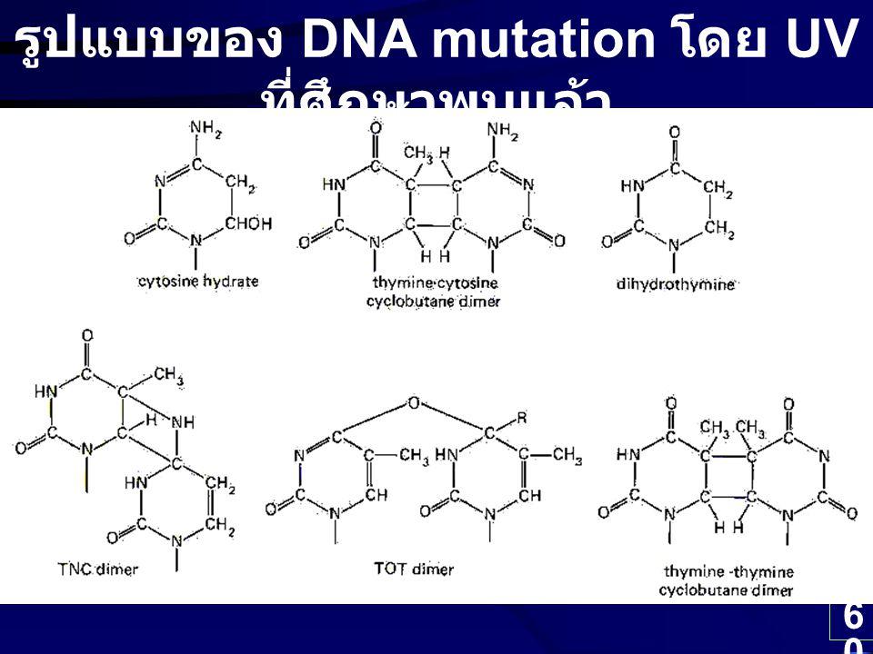 รูปแบบของ DNA mutation โดย UV ที่ศึกษาพบแล้ว