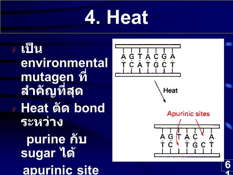 4. Heat เป็น environmental mutagen ที่สำคัญที่สุด