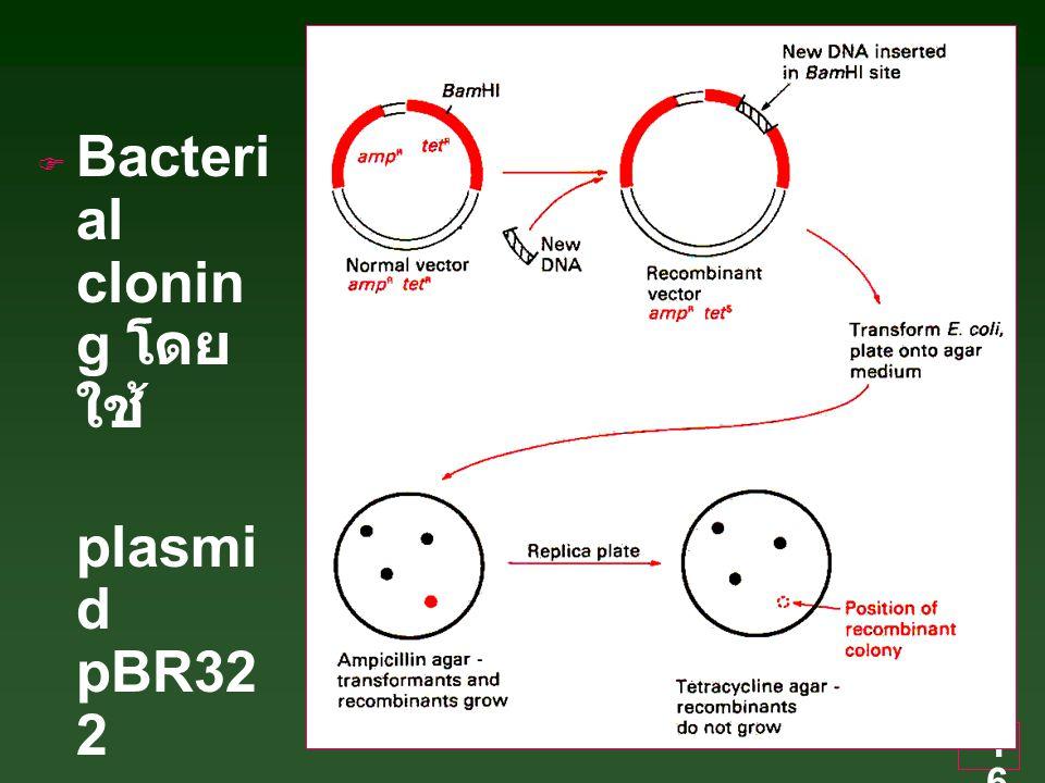 Bacterial cloning โดยใช้