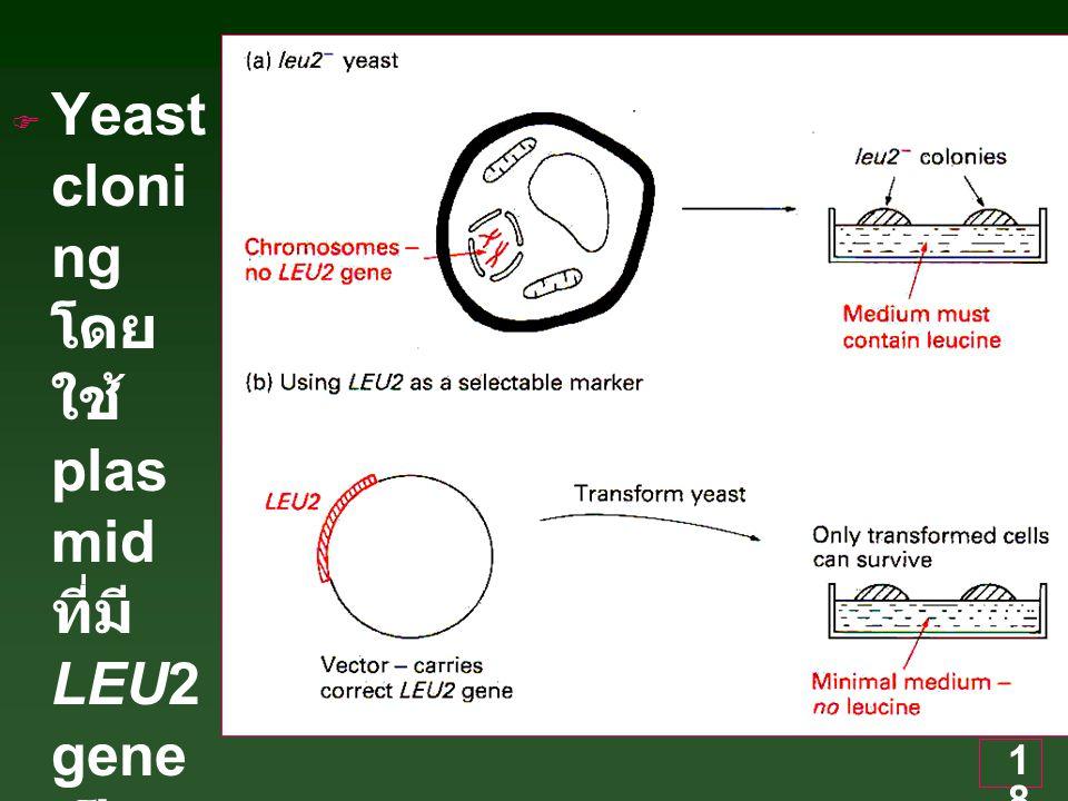 Yeast cloning โดยใช้ plasmid ที่มี LEU2 gene เป็น marker