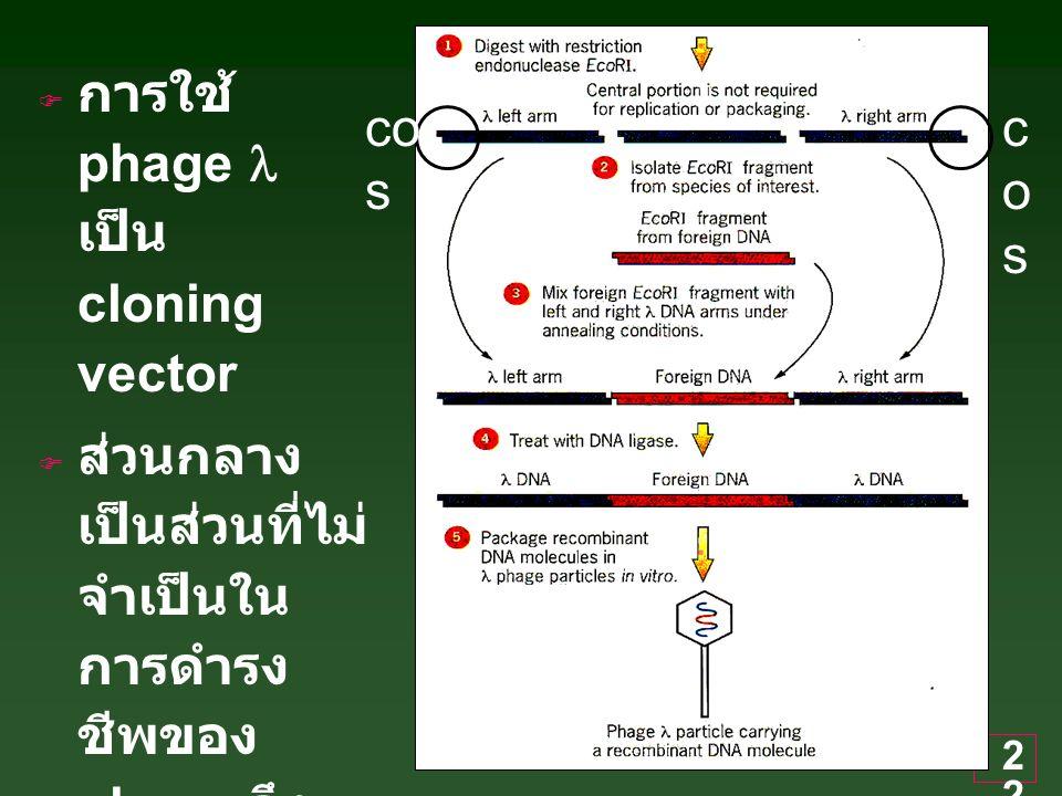 การใช้ phage l เป็น cloning vector