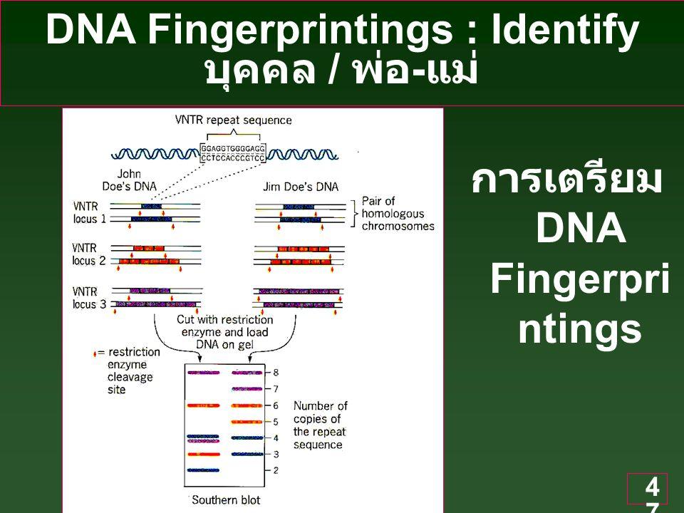 DNA Fingerprintings : Identify บุคคล / พ่อ-แม่