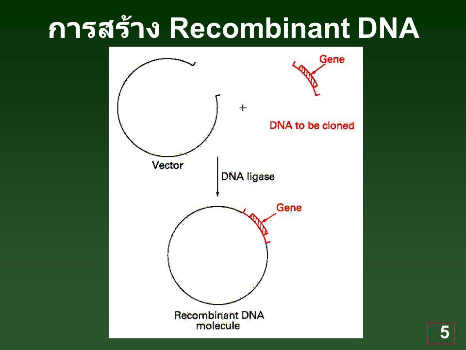 การสร้าง Recombinant DNA