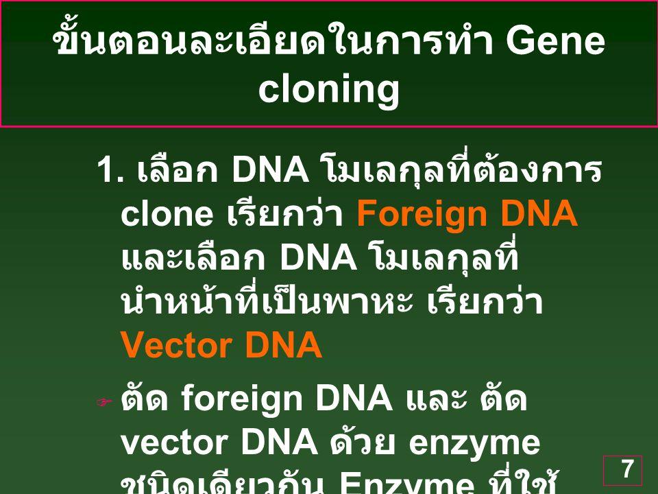 ขั้นตอนละเอียดในการทำ Gene cloning