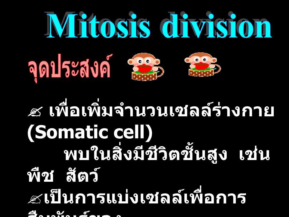  เพื่อเพิ่มจำนวนเซลล์ร่างกาย (Somatic cell)