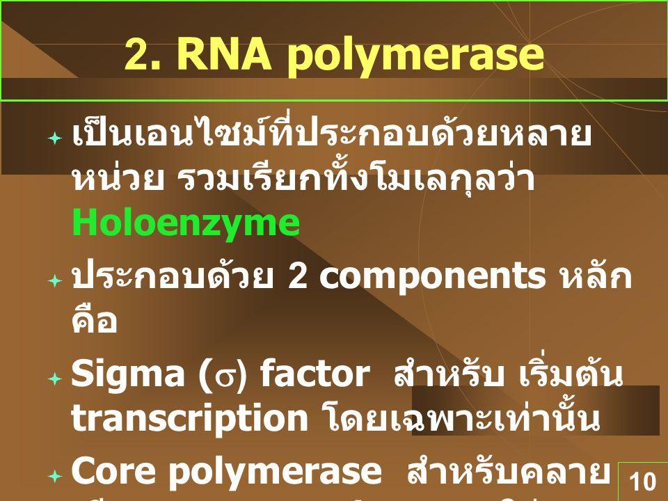 2. RNA polymerase เป็นเอนไซม์ที่ประกอบด้วยหลายหน่วย รวมเรียกทั้งโมเลกุลว่า Holoenzyme. ประกอบด้วย 2 components หลัก คือ.
