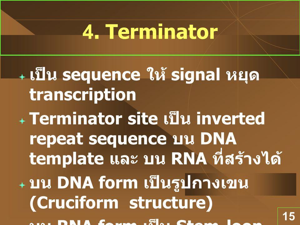 4. Terminator เป็น sequence ให้ signal หยุด transcription