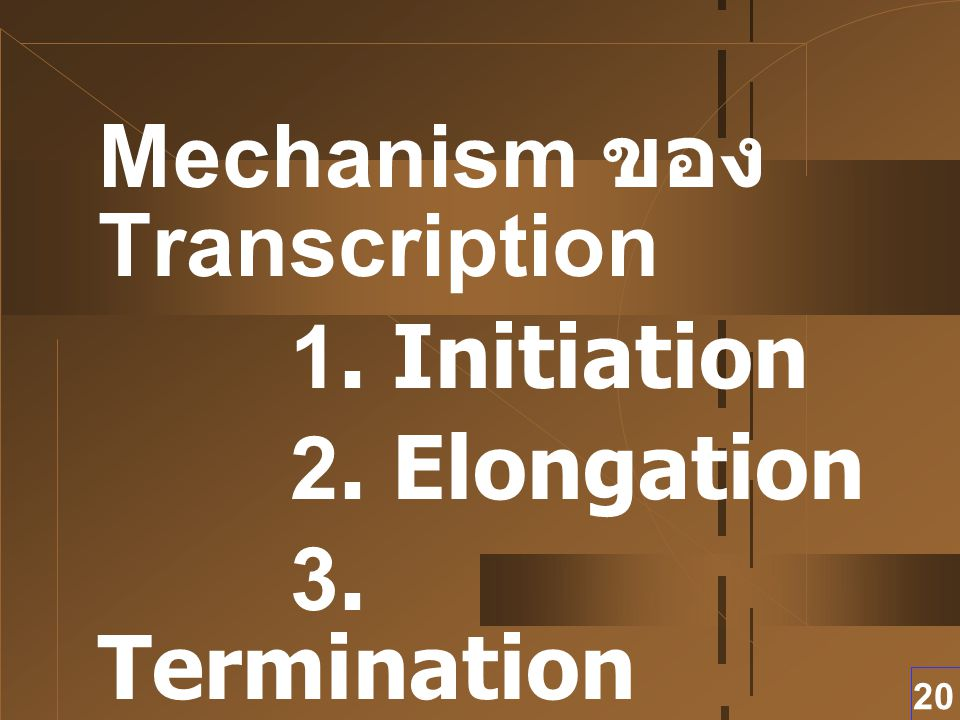 Mechanism ของ Transcription 1. Initiation 2. Elongation 3. Termination