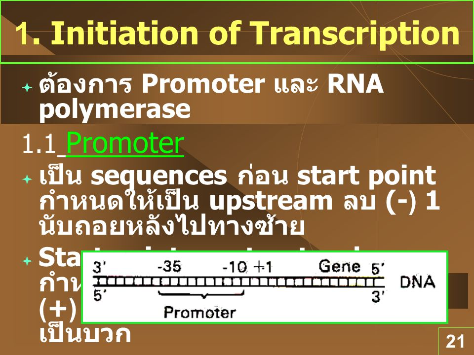 1. Initiation of Transcription