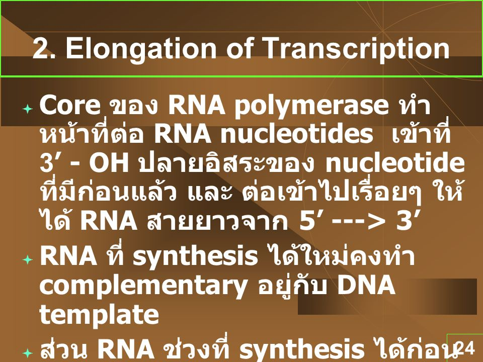 2. Elongation of Transcription