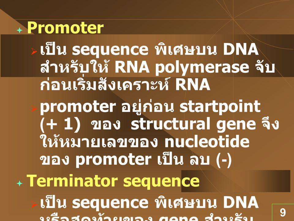 Promoter เป็น sequence พิเศษบน DNA สำหรับให้ RNA polymerase จับก่อนเริ่มสังเคราะห์ RNA.