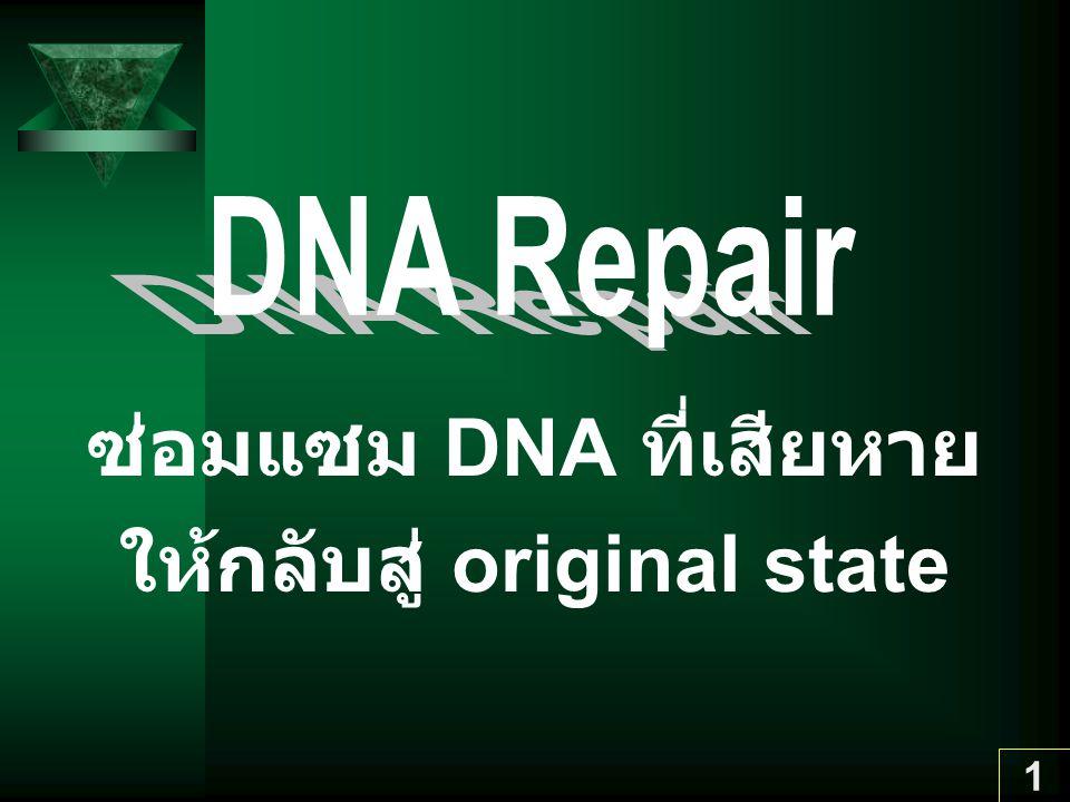 ซ่อมแซม DNA ที่เสียหาย ให้กลับสู่ original state