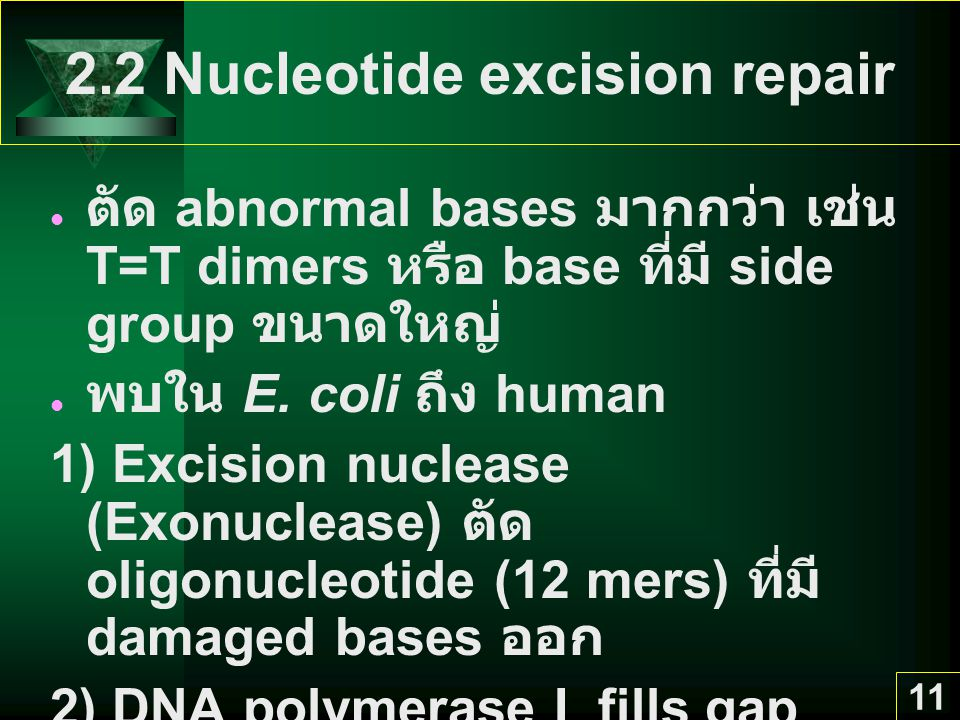 2.2 Nucleotide excision repair