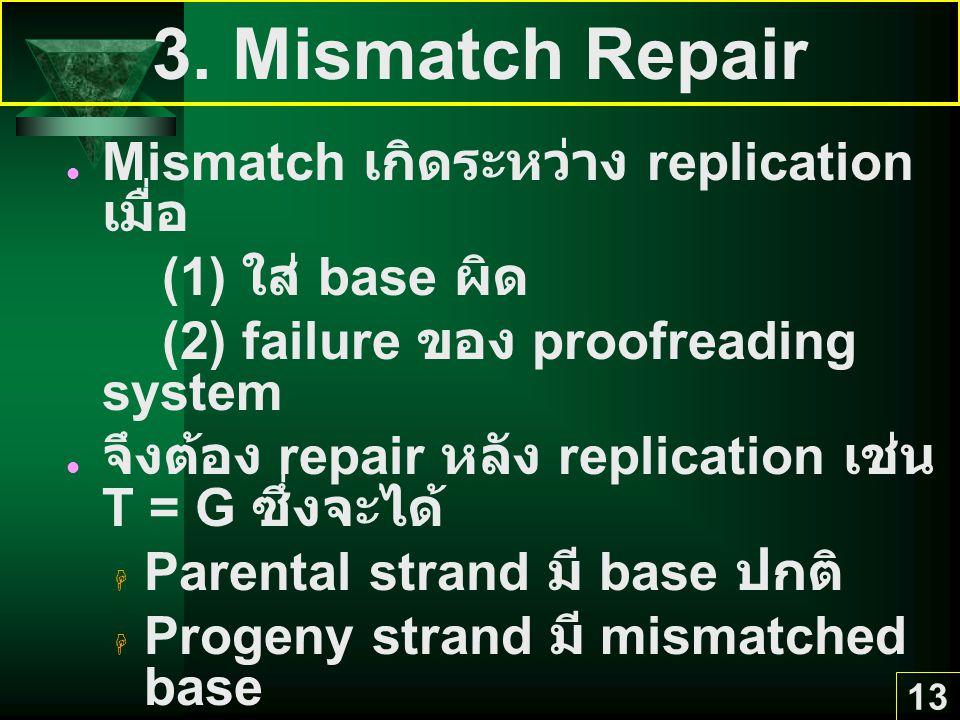 3. Mismatch Repair Mismatch เกิดระหว่าง replication เมื่อ