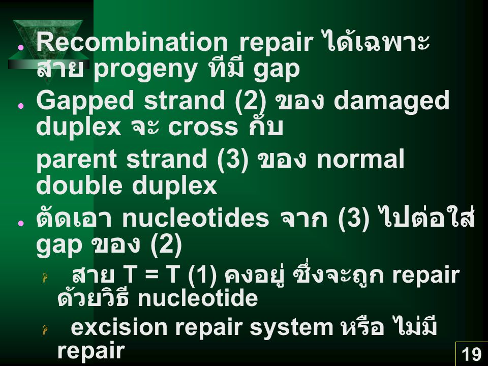 Recombination repair ได้เฉพาะ สาย progeny ทีมี gap