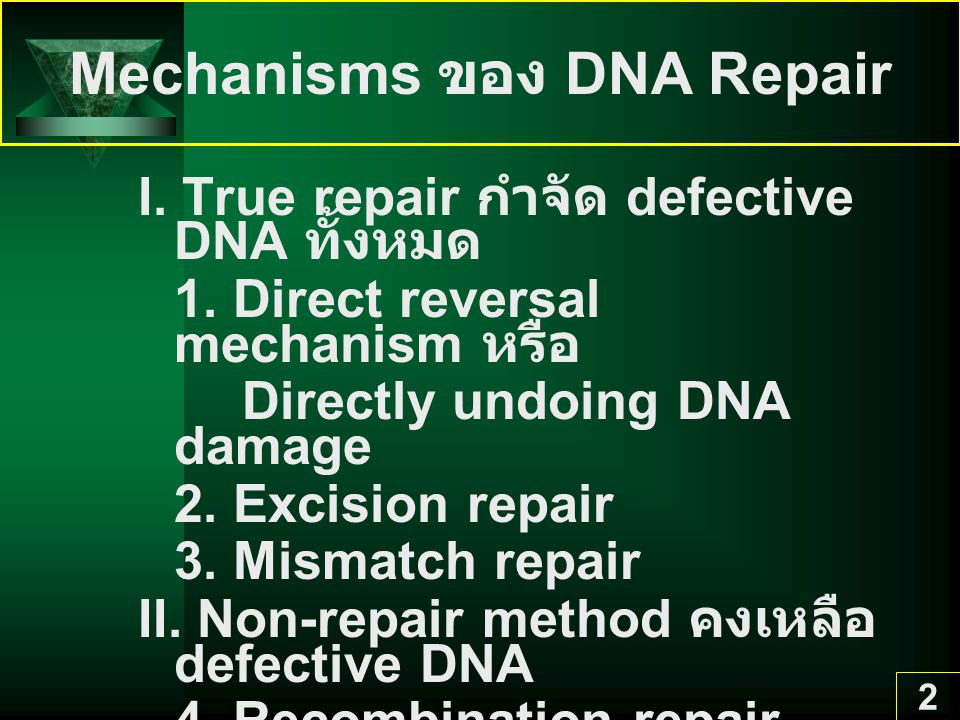 Mechanisms ของ DNA Repair