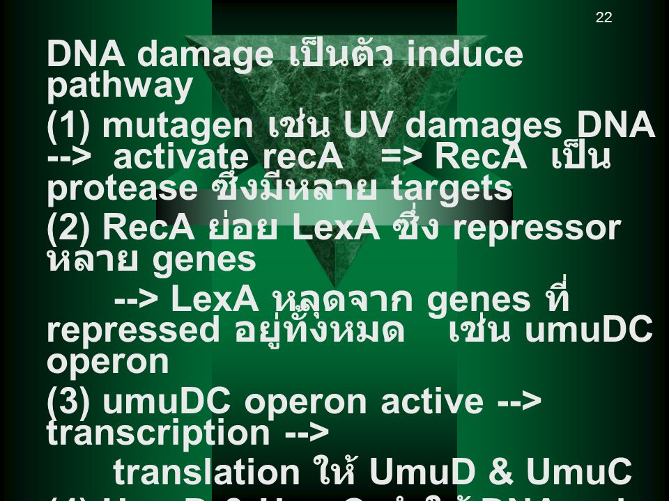 DNA damage เป็นตัว induce pathway